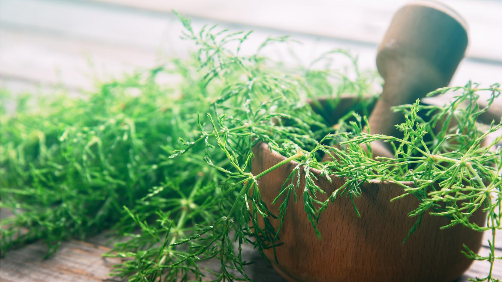 Növényvédelem ecettel